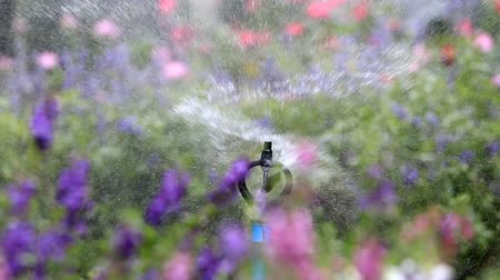 irrigação : Close up water sprinkler spray watering, flower garden background, HD Clip.