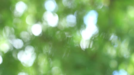 запачканный : Green blur, bokeh or defocus background,Time lapse shoot move shoot.