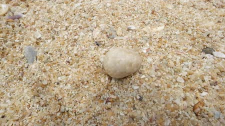 hermit crab : Hermit crab on the beach running away. Top view. Concept of hiding from problems Stock Footage