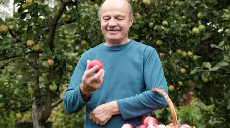 gururlu : The senior caucasian man in blue sweater enjoys the crop of apples in the garden. He is proud of his harvest results Stok Video