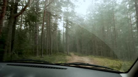 bumps : Car driving on rural autumn forest road. Benefits of using gimbal during video shoot