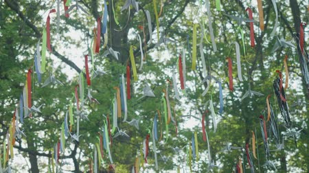 árbocszalag : Pennants hanging on line amid tree branches