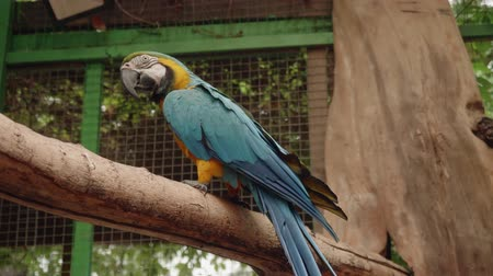 kabartmak : Blue and yellow parrot sitting on tree branch in cage of zoo