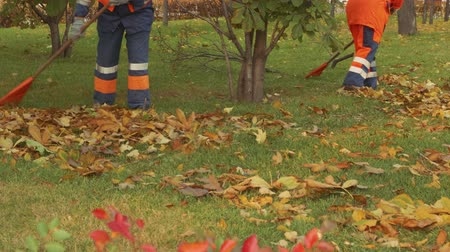 donuk : Street cleaners in uniform pile up leaves