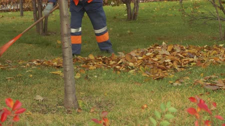 golden falls : Legs of street cleane who pile up leaves in park Stock Footage