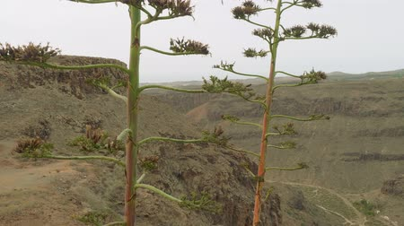 greatness : View from viewing point in centre of Grand Canaria. Canary island pine is in centre