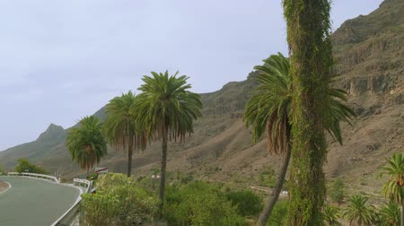 kanári : View of palms along road on edge of Fataga