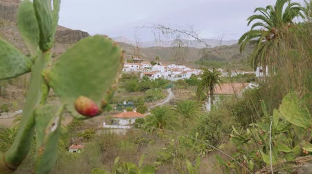 motherland : View of Fataga from top of hill with cactus on left