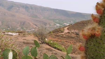 greatness : View of mountains and trees and cactus from viewing point in centre of Gran Canaria