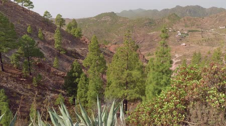greatness : Mountains with cactus agava and canary pines. View from viewing point in centre of Gran Canaria Stock Footage