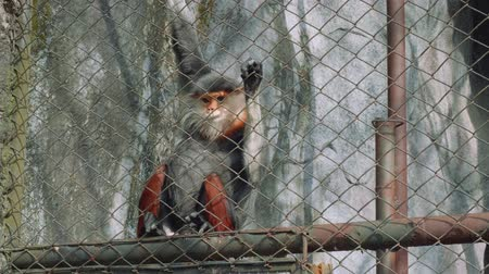 gregarious animal : Lovely monkeys in cage in Khao Kheow Open Zoo
