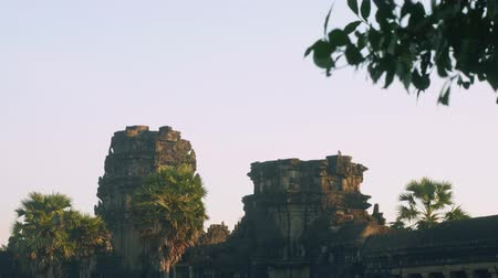 Ангкор : View of monkey on ruins of Angkor Wat temple in early morning