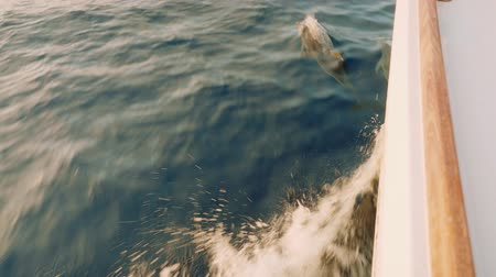 Dolphins swimming in ocean near sailing yacht. View from left board Stock Footage