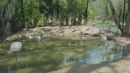 gregarious animal : View of plenty flamingos in zoo in Pattaya