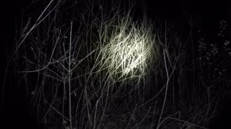 zseblámpa : POV shot as you walk through a spooky scary forest at night
