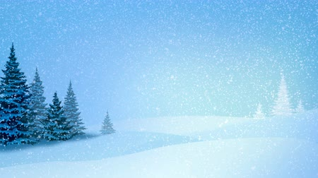 szron : Snowfall, snow and fir trees covered with hoarfrost and snow in evening forest in winter. Looped motion graphic.