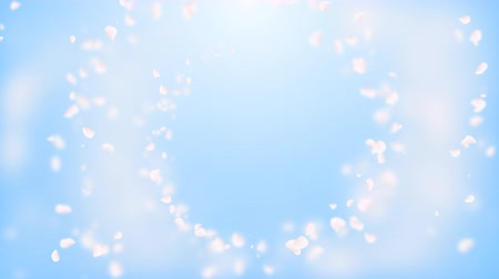 pink : White petals of sakura falling on romantic blue abstract background. Looped 4K motion spring blossom graphic.