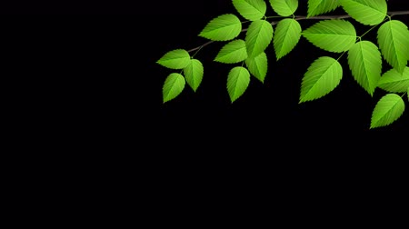 селективный : Natural branch with green leaves. Graphic element for univesary design. Looped 4K motion graphic.