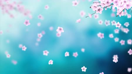 nisan : White petals of sakura falling on romantic abstract background. Looped 4K motion spring blossom graphic.