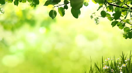 Sunny background with Natural branch with green leaves on the glade with chamomiles.
