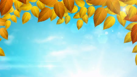 Sunny season Autumn background with Natural branch with orange leaves on the blue sky with sunlights. Stok Video