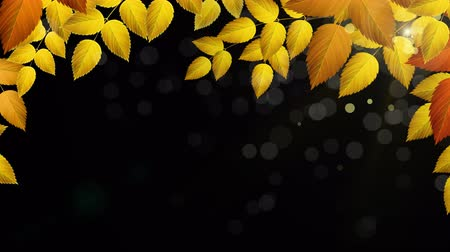outonal : Natural Autumn branch with leaves with sunlights. Looped 4K motion graphic with Alpha channel.