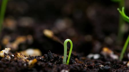 tohum : Time-Lapse of germinating plants