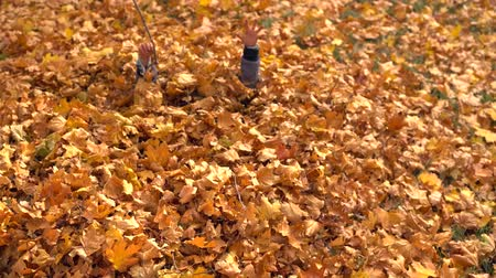 gizleme : Young boy playing in the pile of yellow leaves
