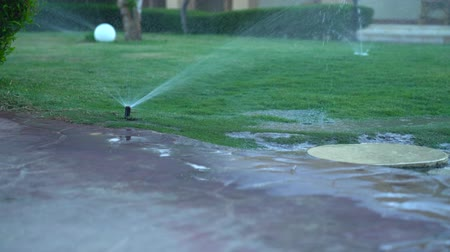 hidratar : Sprinkler watering a green grass lawn