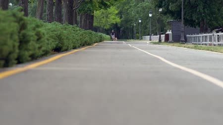 macadam : Low angle view of a man exercising his dogs