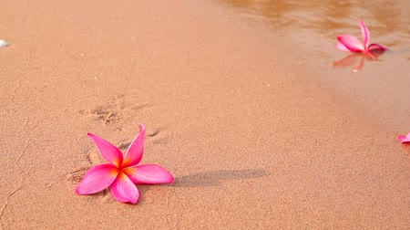 florido : Frangipani or plumeria flowers and wave on the beach