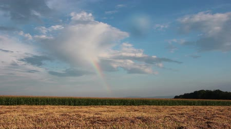arco íris : Rainbow over corn field disappears, time lapse