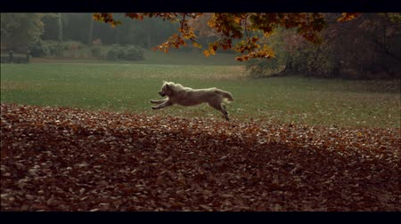 outside : The running dog