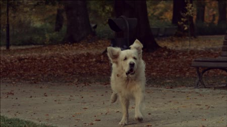 active : The running dog