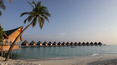 Мальдивы : Palm tree on tropical island at ocean. Maldives