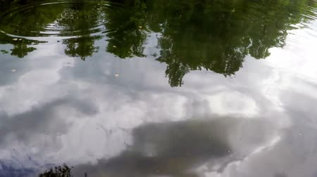 yansıma : reflection in  lake - wood, clouds in  sky, silhouettes of  flying birds
