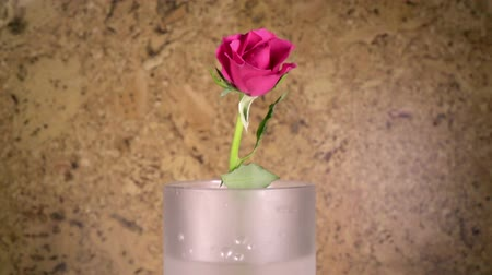 pétalas : the red rose slowly falls in a vase and bouncing, slow motion Vídeos