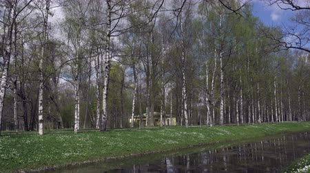 petrklíč : Spring park with the channel on which coast grow white snowdrops in the early spring