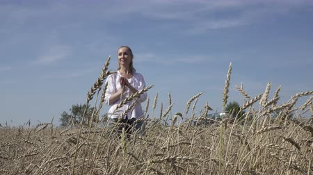 goes : young slender woman with a long fair hair in a white shirt and jeans goes across the field of ripe wheat to summer sunny day Stock Footage