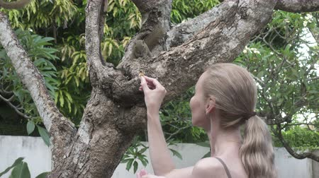 szczur : The young woman feeds with nuts common treeshrew in a tropical garden