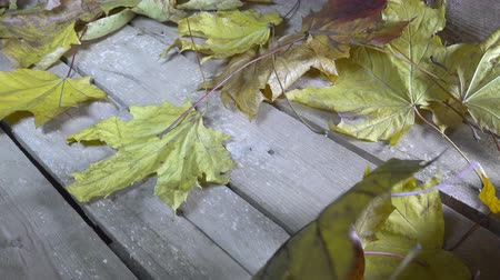 golden falls : Wind blows off the fallen autumn leaves of a maple from a wooden flooring.Slow motion