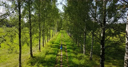 View from the level of tops of trees on the young woman with a long fair hair and in a blue dress going along the birch avenue Stock Footage