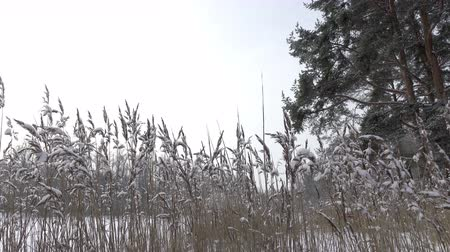 Winter sunny day, Stock Footage
