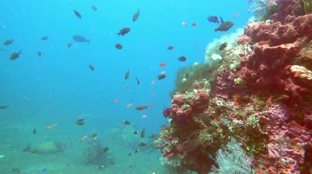 saltwater : underwater landscape of the tropical sea, fish and corals of different color