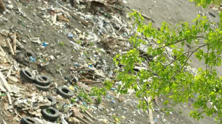carcinogenic : Landfill in city, large amount of garbage dumped Stock Footage