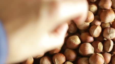 noccioline : Filbert nuts. Placer in un cesto di vimini, close-up