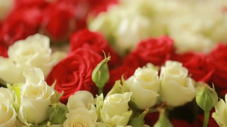 pétala : bright colorful bouquet of red and white roses, close-up