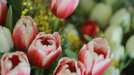 valentin nap : juicy, colorful bouquet of different color tulips and mimosas, close-up