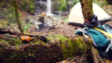 tentáculo : 4k, slow motion. woman tourist prepares sausages on a mini grill in a forest near a waterfall on the bank of a mountain river Stock Footage