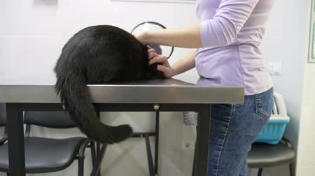 перелом : 4K. Slow motion. an unhappy woman brought a cat to a veterinary clinic. waiting for the doctors appointment.